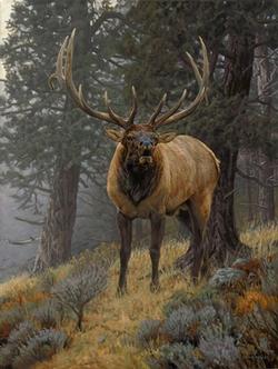 Foggy Mountain Challenge / Canvas Print / 30
