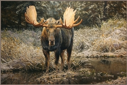 September Moose / Canvas Print 30