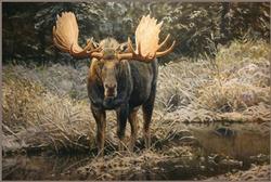 September Moose / Canvas Print 30