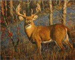 Bittersweet Buck / 24x30 Canvas Print