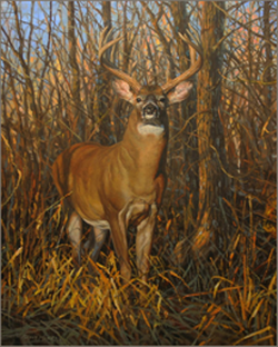 Big Ten-Whitetail